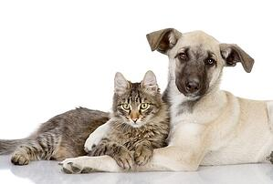 Caring For Pets | Eskaton Senior Care